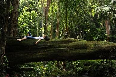 Lady_Lying_On_Tree_Main